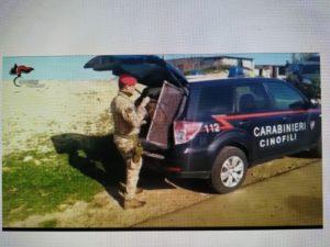 I carabinieri di Cagliari hanno arrestato, in due distinte operazioni, un latitante ed un 35enne con 1,3 kg di cocaina.
