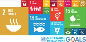 Stage parzialmente retribuiti in tutto il mondo con l'Internship Programme della FAO.