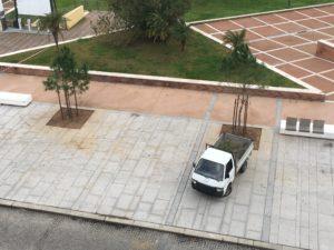 Quattro nuovi alberi di pino per la riqualificazione di via Manno, a Carbonia.