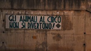 Iniziativa di CasaPound, a Cagliari, contro la presenza degli animali negli spettacoli circensi.