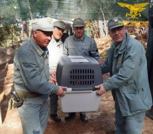 Nuove iniziative di prevenzione e repressione del bracconaggio nel Sulcis e nel Sarrabus