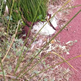 I lavori della pista ciclabile Carbonia-Sant'Antioco non sono ancora ultimati ma in alcuni tratti richiedono già urgenti  interventi di manutenzione