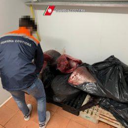 """Sant'Antioco: sequestrati 345 kg di """"Tonno rosso"""" privo di tracciabilità, non idoneo al consumo umano"""