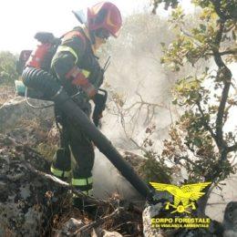 Incendi nelle campagne di Sassari e Calasetta, sul posto uomini e mezzi del Corpo forestale