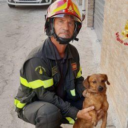 Iglesias: a fuoco un appartamento, i vigili del fuoco salvano un cane ed alcuni gatti