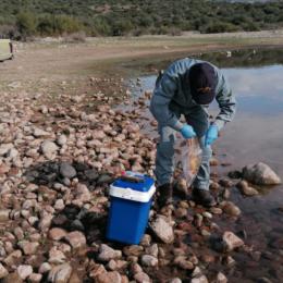 Moria di pesci nel lago di Monte Pranu, interviene il Corpo forestale